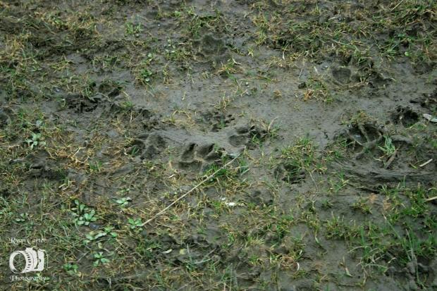 mudpaws.jpg